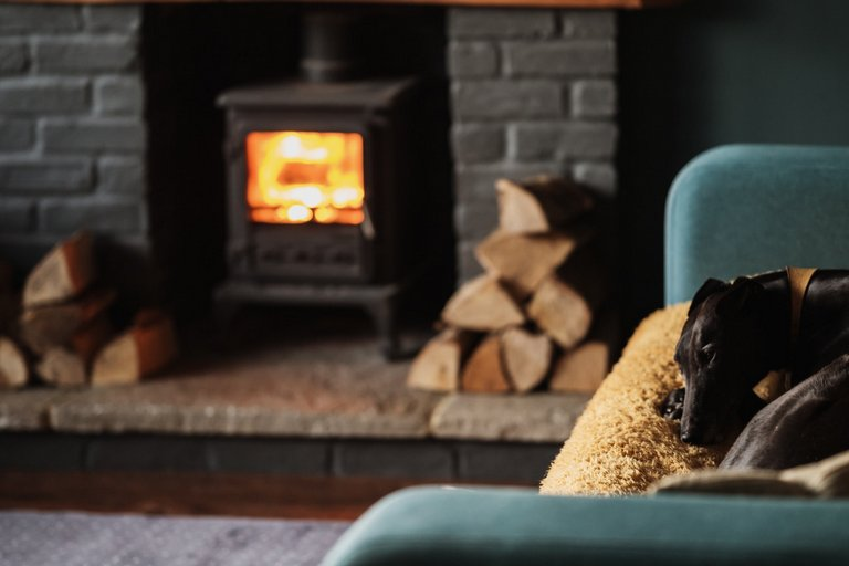 Cosy dog thanks to Hobart Roof Insulation